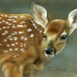 Curious Fawn by Rebecca Latham, 7x5 Watercolor