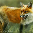 Glance Back- Red Fox by Rebecca Latham
