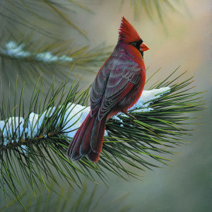 Winter Red by Rick Kelley